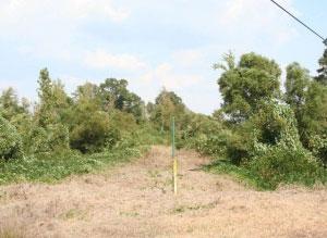 field after treatment by Kellis Vegetation
