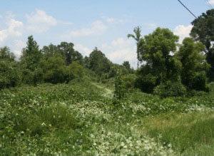 Before vegetation management treatement